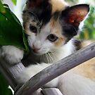 I gotchoo leaf creature! Finally!  by meowiyer