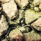 fresh water snake in lake garda by xxnatbxx