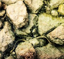 fresh water snake in lake garda by xxnatbxx