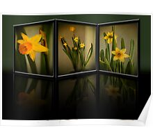 Winter Daffodils  Poster