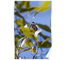 Butterfly - Mon Repos Beach - Australia Poster