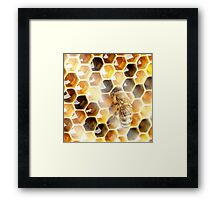 Animals - Bee Framed Print