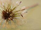 Falling Dandelion Seed  by rhian mountjoy