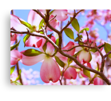 """Looking Up Through The Pink Dogwood Tree"" Canvas Print"