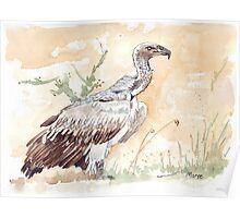 White-backed Vulture Poster