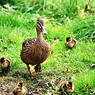 Mrs.Mallard & Children by Stan Owen