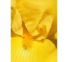 True Yellow Beauty Photographic Print