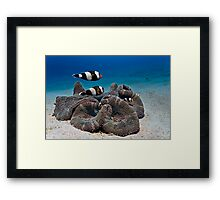 My anemone is my castle... Framed Print