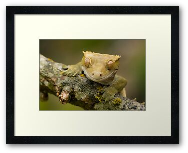 The happy gecko by AngiNelson