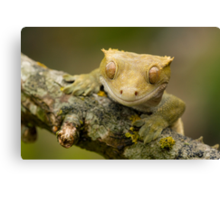The happy gecko Canvas Print