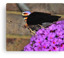 Peacock profile Canvas Print