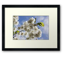 Blossom In The Sky Framed Print