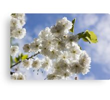 Blossom In The Sky Canvas Print