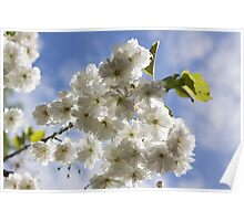 Blossom In The Sky Poster