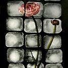 Flowercubes by Elma Claassen