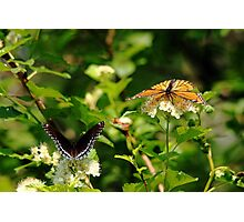Wings And Blooms Photographic Print