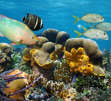 Underwater scenery with fish in a coral reef by Dam - www.seaphotoart.com