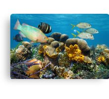 Underwater scenery with fish in a coral reef Canvas Print