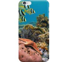 Tropical underwater landscape in a coral reef iPhone Case/Skin