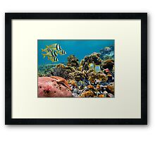 Tropical underwater landscape in a coral reef Framed Print