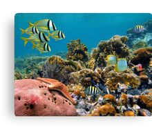 Tropical underwater landscape in a coral reef Canvas Print