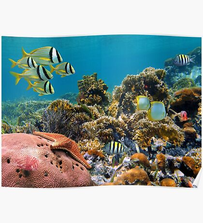 Tropical underwater landscape in a coral reef Poster