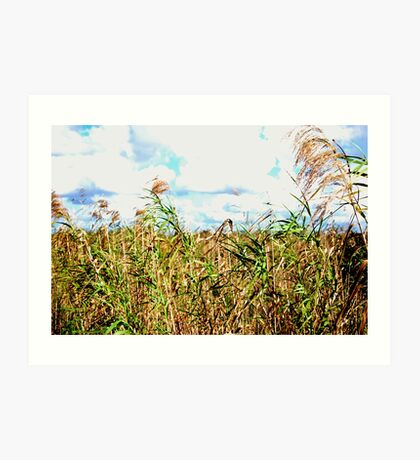 Wheat Fields in Everglades Art Print