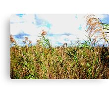 Wheat Fields in Everglades Canvas Print