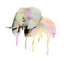 Chroma Elephant Photographic Print