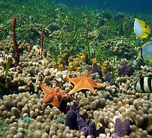 Underwater coral reef with starfish and butterfly fish by Dam - www.seaphotoart.com