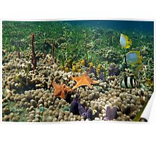 Underwater coral reef with starfish and butterfly fish Poster
