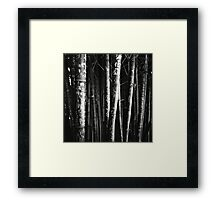 scarred bamboo Framed Print