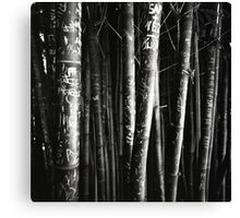 scarred bamboo Canvas Print