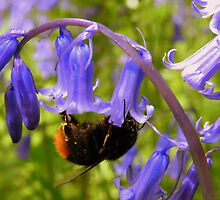 Collecting Nectar Points by Rob Parsons