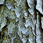 Tree bark by Laurie Minor
