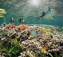 Shallow coral reef with tropical fish and an eagle ray by Dam - www.seaphotoart.com