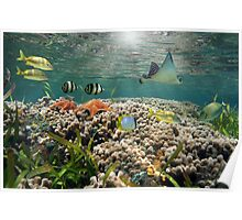 Shallow coral reef with tropical fish and an eagle ray Poster