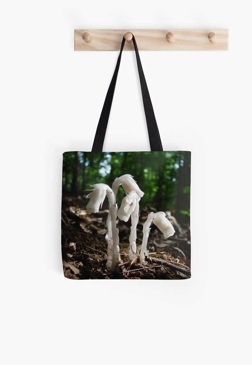 Indian Pipes In The Forest by Jean Gregory  Evans