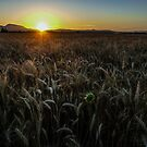 Harvest Time Sunset by Charles & Patricia   Harkins ~ Picture Oregon