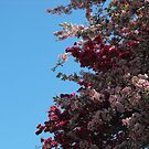 Under The Apple Tree by Tracy Wazny