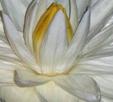 White Water Lily Sticker