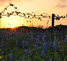 Blue Bonnet Sunset by Rena Neal