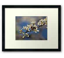 Plums and Bee Bums! Framed Print