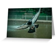 Pigeon in flight - Freedom PT 2.0 Greeting Card