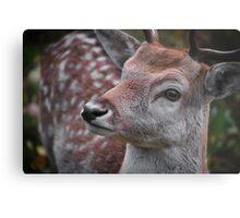 Northern Ontario Deer Metal Print