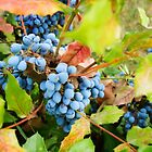 Wild grapes by Alexandru Vita