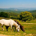 Rural landscape with horses by Alexandru Vita