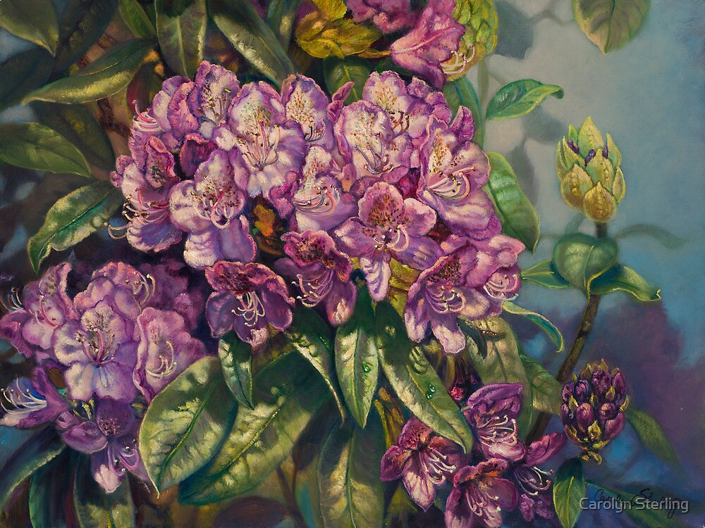 """Purple Passion"" Rhododendrum by Carolyn Sterling"