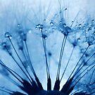 dandi feels blue by Angel Warda