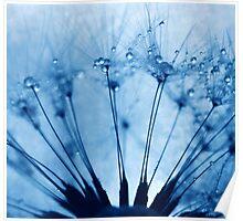 dandi feels blue Poster